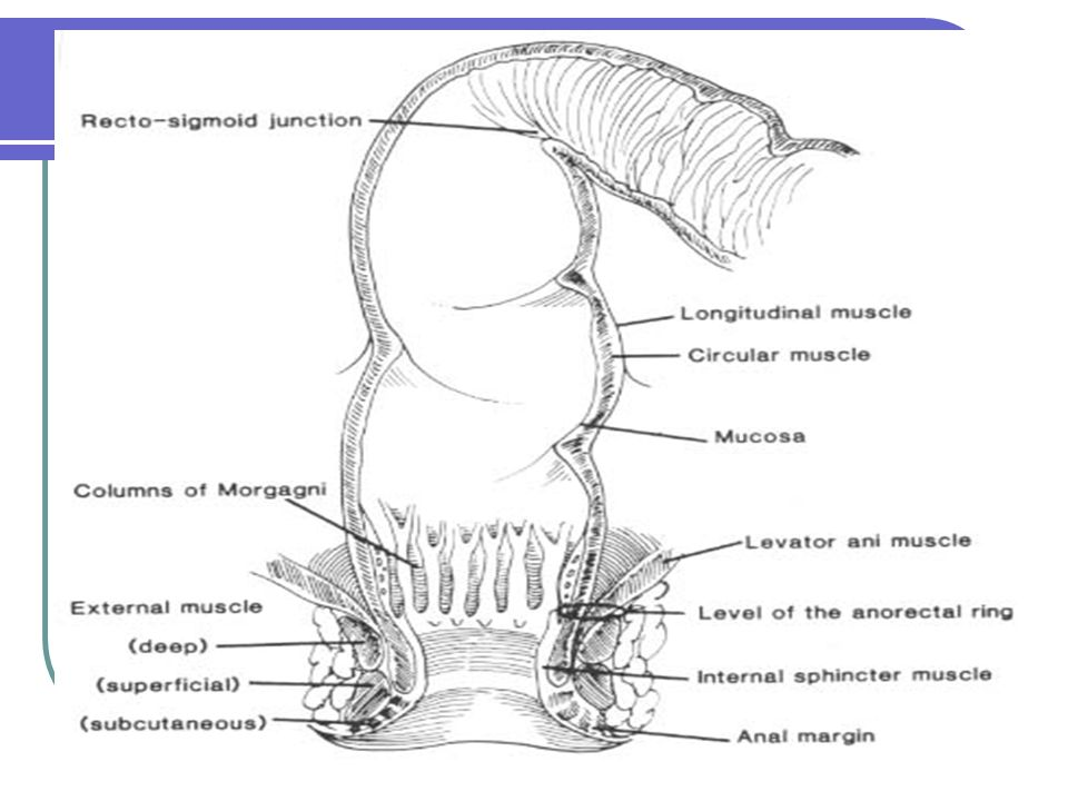 Etiopatogenia Hemorroidal La naturaleza exacta de la enfermedad hemorroidaria no está totalmente esclarecida.