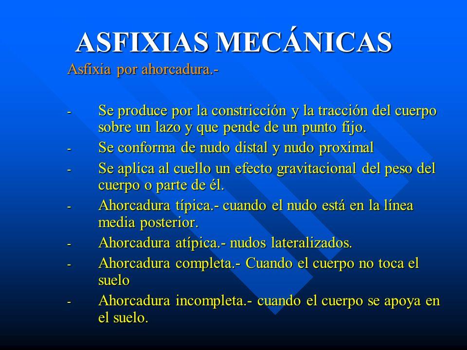 ASFIXIAS MECÁNICAS Asfixia por ahorcadura.- - Se produce por la constricción y la tracción del cuerpo sobre un lazo y que pende de un punto fijo. - Se