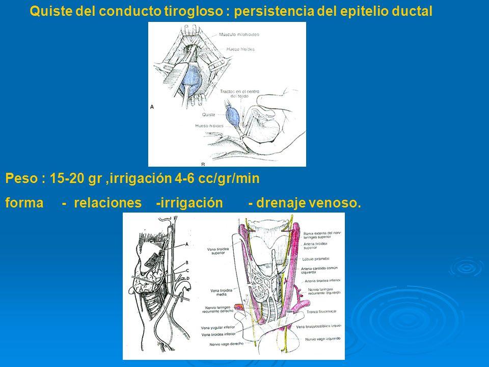 Quiste del conducto tirogloso : persistencia del epitelio ductal Peso : 15-20 gr,irrigación 4-6 cc/gr/min forma - relaciones -irrigación - drenaje venoso.