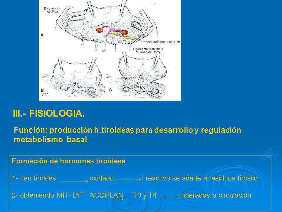 Quiste del conducto tirogloso : persistencia del epitelio ductal Peso : 15-20 gr,irrigación 4-6 cc/gr/min forma - relaciones -irrigación - drenaje ven