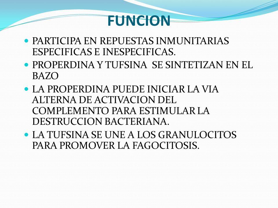 FUNCION PARTICIPA EN REPUESTAS INMUNITARIAS ESPECIFICAS E INESPECIFICAS. PROPERDINA Y TUFSINA SE SINTETIZAN EN EL BAZO LA PROPERDINA PUEDE INICIAR LA