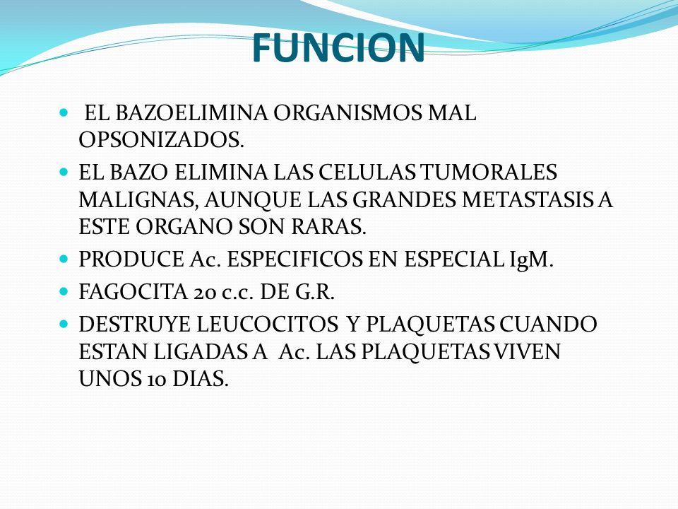 FUNCION EL BAZOELIMINA ORGANISMOS MAL OPSONIZADOS. EL BAZO ELIMINA LAS CELULAS TUMORALES MALIGNAS, AUNQUE LAS GRANDES METASTASIS A ESTE ORGANO SON RAR