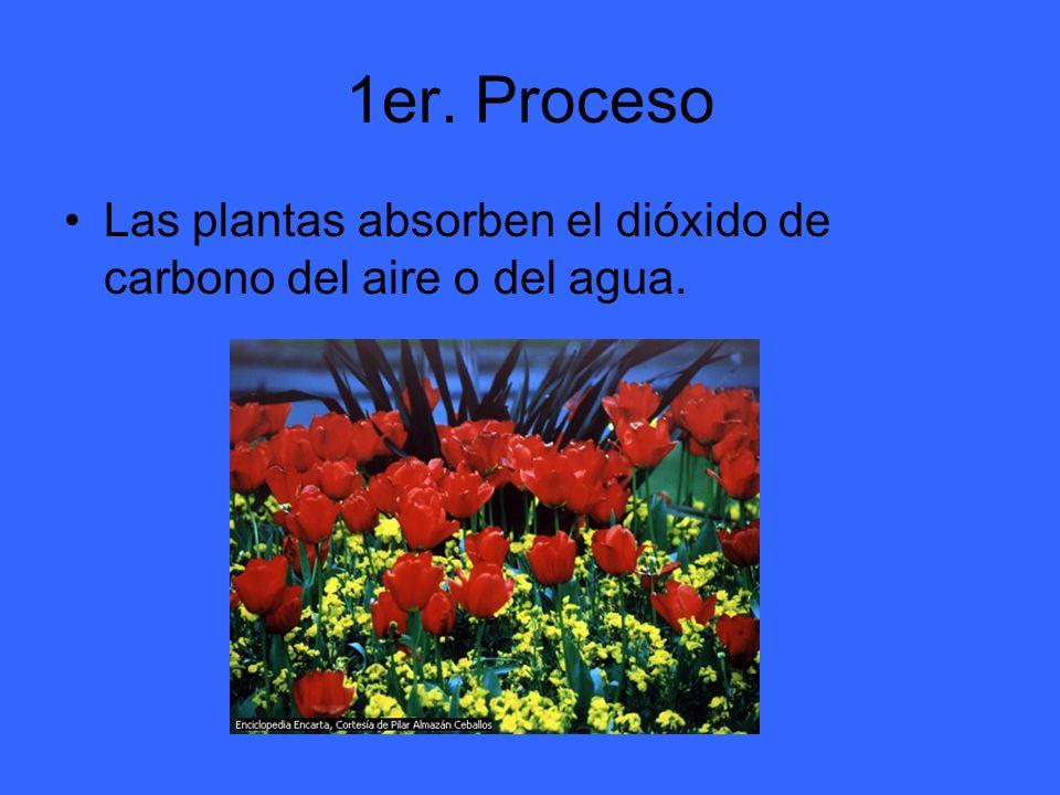 1er. Proceso Las plantas absorben el dióxido de carbono del aire o del agua.