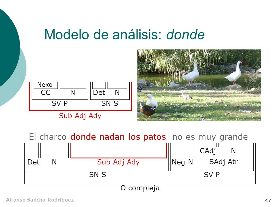 Alfonso Sancho Rodríguez 46 Modelo de análisis: cuyo Están aprobados los alumnos cuyos apellidos empiecen por w O compleja SN SSV P N Sub Adj Ady Det