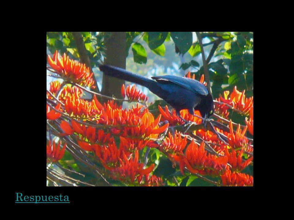 Hay mucha bioversidad en El Salvador pero hay muchos especios en peligro, a causa de la deforestaci ó n y la contaminaci ó n del agua.