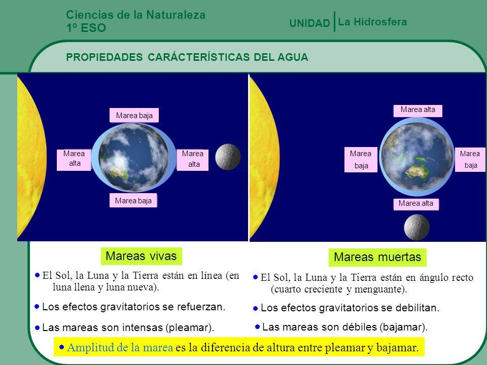 Ciencias de la Naturaleza 1º ESO PROPIEDADES CARÁCTERÍSTICAS DEL AGUA La Hidrosfera UNIDAD Rompiente Movimiento circular Viento Cresta Seno Playa Altu