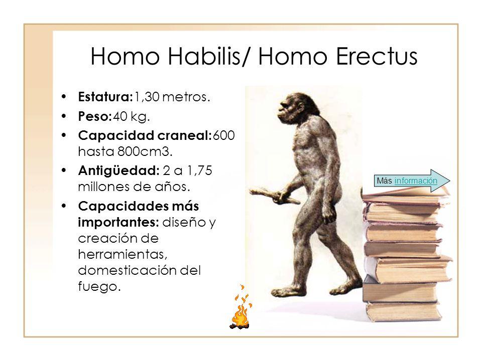 Homo Habilis/ Homo Erectus Estatura: 1,30 metros. Peso: 40 kg. Capacidad craneal: 600 hasta 800cm3. Antigüedad: 2 a 1,75 millones de años. Capacidades