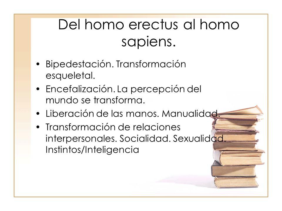 Del homo erectus al homo sapiens. Bipedestación. Transformación esqueletal. Encefalización. La percepción del mundo se transforma. Liberación de las m