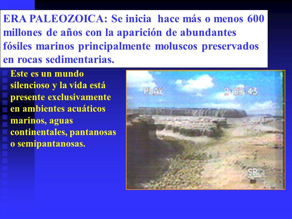 ERA PALEOZOICA: Se inicia hace más o menos 600 millones de años con la aparición de abundantes fósiles marinos principalmente moluscos preservados en