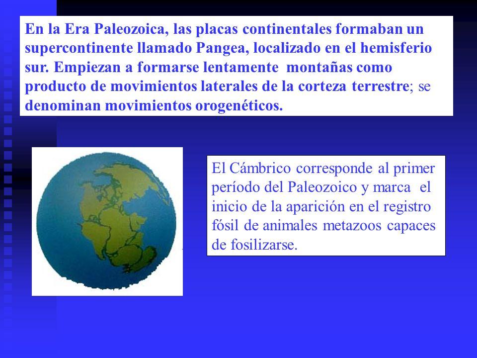 El Cámbrico corresponde al primer período del Paleozoico y marca el inicio de la aparición en el registro fósil de animales metazoos capaces de fosili