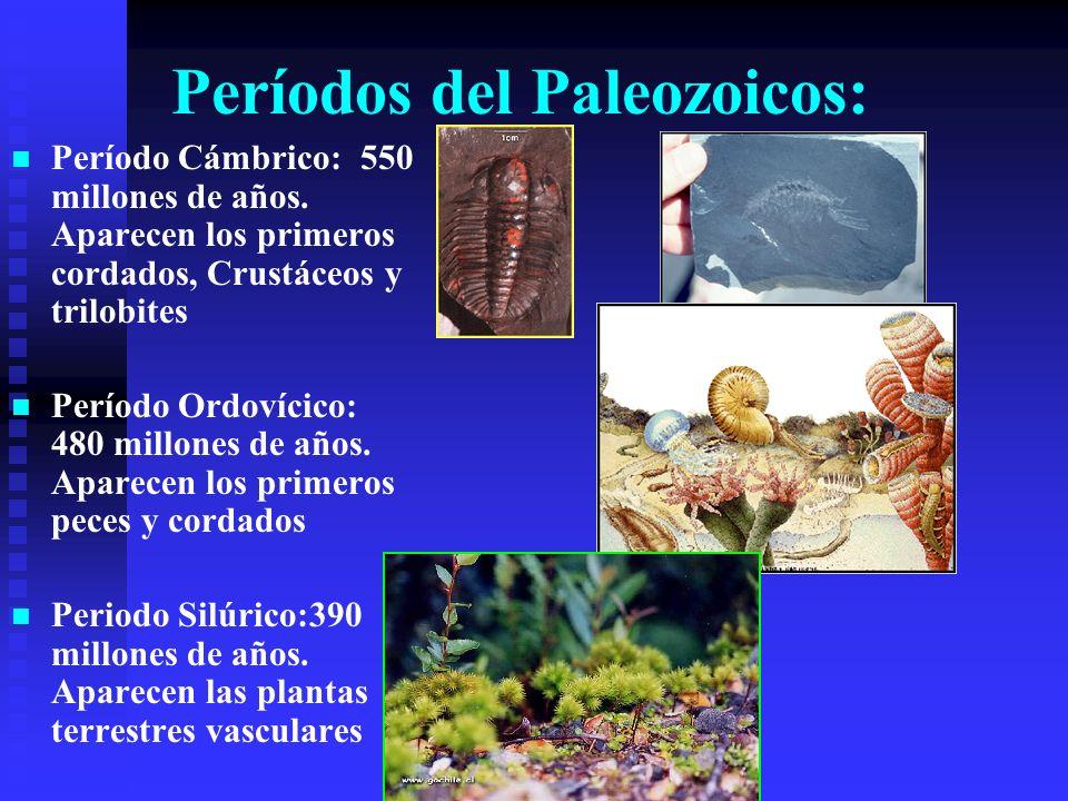 Períodos del Paleozoicos: Período Cámbrico: 550 millones de años. Aparecen los primeros cordados, Crustáceos y trilobites Período Ordovícico: 480 mill