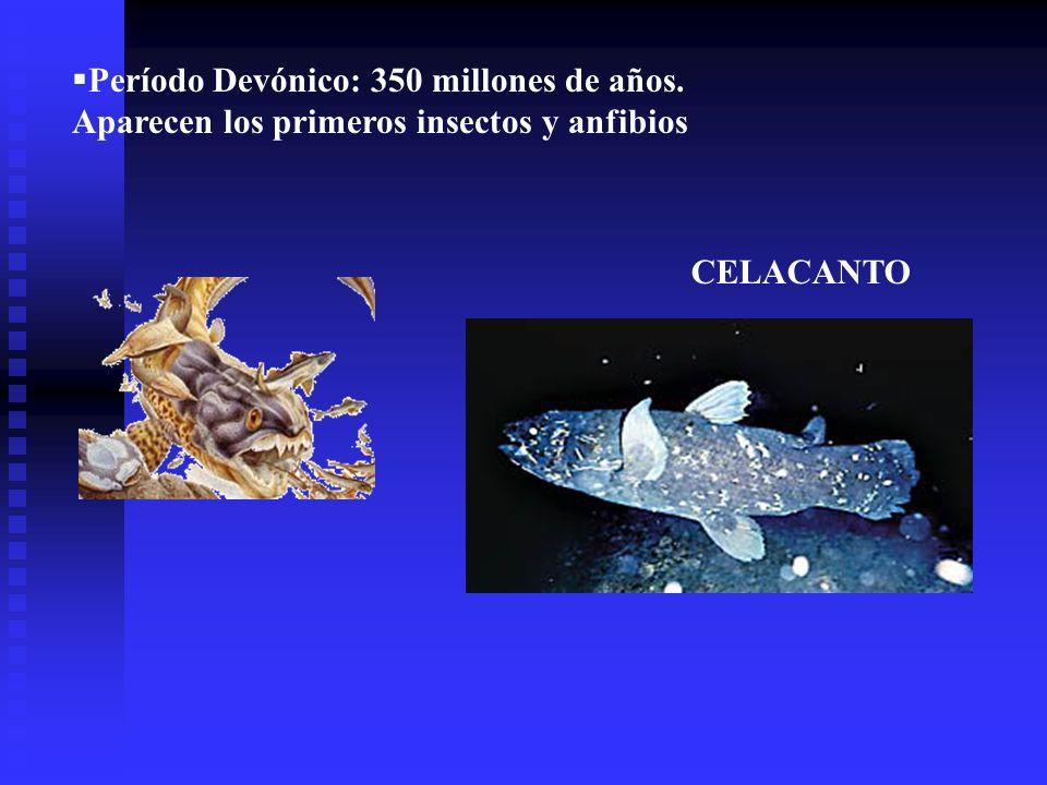 Período Devónico: 350 millones de años. Aparecen los primeros insectos y anfibios CELACANTO