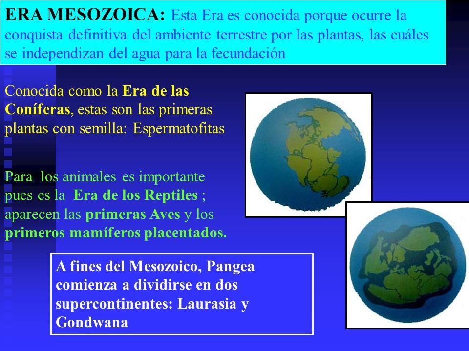 ERA MESOZOICA: Esta Era es conocida porque ocurre la conquista definitiva del ambiente terrestre por las plantas, las cuáles se independizan del agua