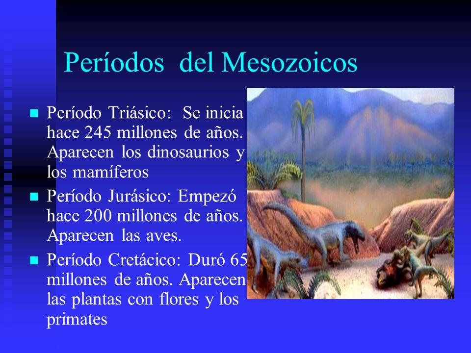 Períodos del Mesozoicos Período Triásico: Se inicia hace 245 millones de años. Aparecen los dinosaurios y los mamíferos Período Jurásico: Empezó hace