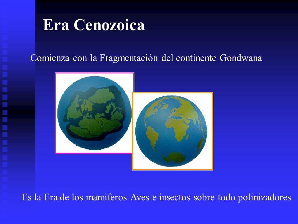 Era Cenozoica Comienza con la Fragmentación del continente Gondwana Es la Era de los mamiferos Aves e insectos sobre todo polinizadores
