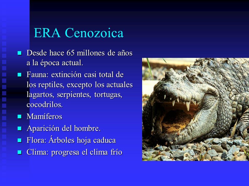 ERA Cenozoica Desde hace 65 millones de años a la época actual. Desde hace 65 millones de años a la época actual. Fauna: extinción casi total de los r