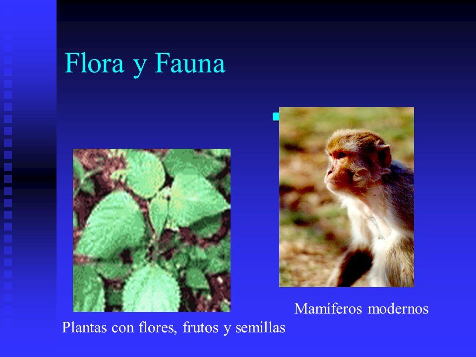Flora y Fauna Primates Mamíferos modernos Plantas con flores, frutos y semillas