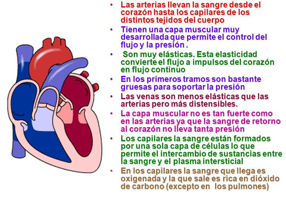 Hay tres tipos de vasos sanguíneos: las arterias, las venas y los capilares sanguíneos. Las arterias son más gruesas y son las que transportan la sang