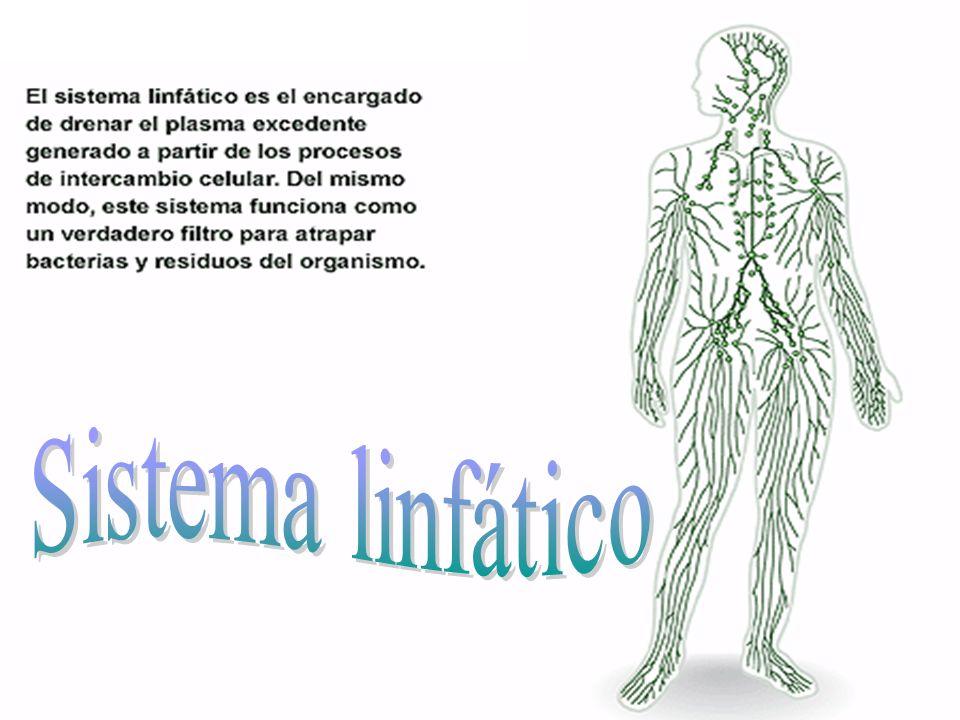1 El aparato circulatorio es el encargado del transporte de la sangre a través del cuerpo. El aparato circulatorio es el encargado del transporte de l