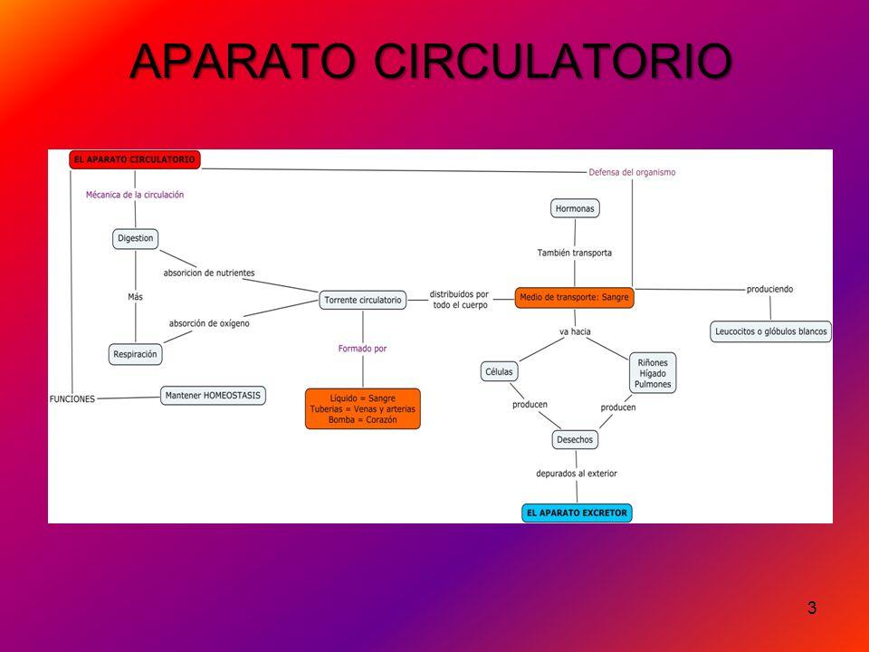 3 APARATO CIRCULATORIO