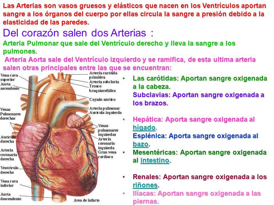 El aparato circulatorio tiene varias funciones sirve para llevar los alimentos y el oxígeno a las células, y para recoger los desechos metabólicos que