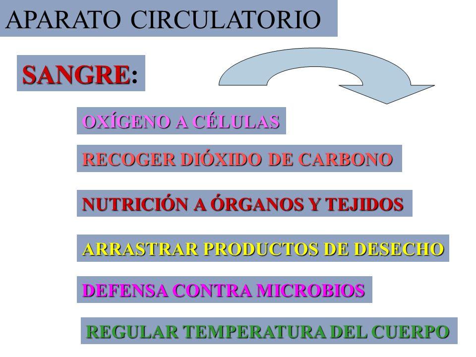 4 OXÍGENO A CÉLULAS RECOGER DIÓXIDO DE CARBONO NUTRICIÓN A ÓRGANOS Y TEJIDOS ARRASTRAR PRODUCTOS DE DESECHO DEFENSA CONTRA MICROBIOS REGULAR TEMPERATURA DEL CUERPO SANGRE SANGRE: