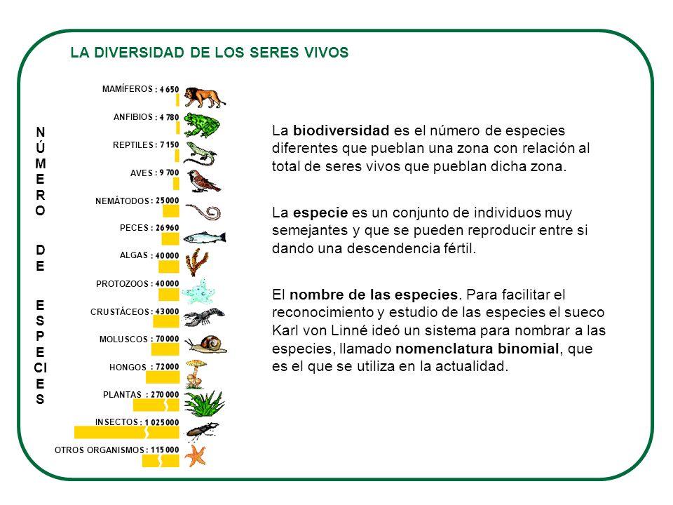 LA DIVERSIDAD DE LOS SERES VIVOS La biodiversidad es el número de especies diferentes que pueblan una zona con relación al total de seres vivos que pu