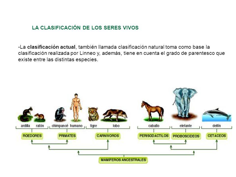 LA CLASIFICACIÓN DE LOS SERES VIVOS -La clasificación actual, también llamada clasificación natural toma como base la clasificación realizada por Linn