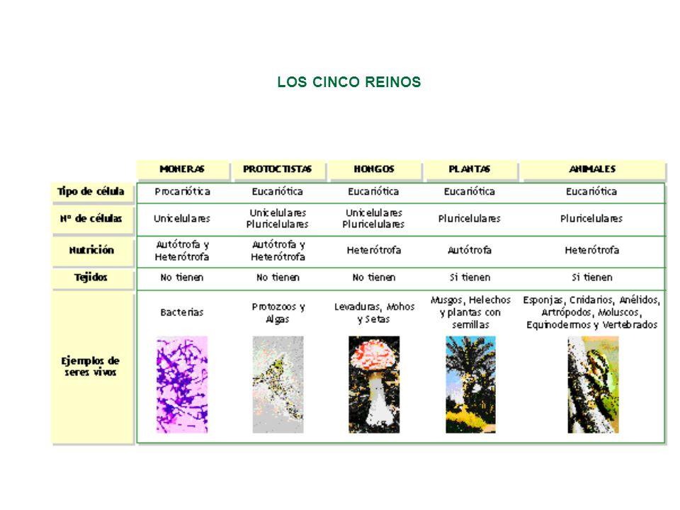 LOS CINCO REINOS