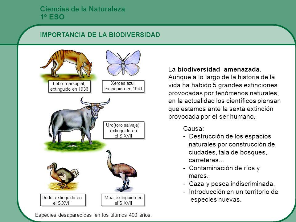 Ciencias de la Naturaleza 1º ESO IMPORTANCIA DE LA BIODIVERSIDAD La biodiversidad amenazada. Aunque a lo largo de la historia de la vida ha habido 5 g