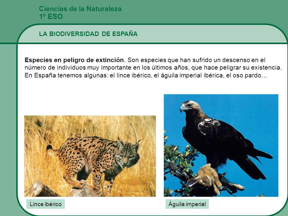 Ciencias de la Naturaleza 1º ESO LA BIODIVERSIDAD DE ESPAÑA Especies en peligro de extinción. Son especies que han sufrido un descenso en el número de