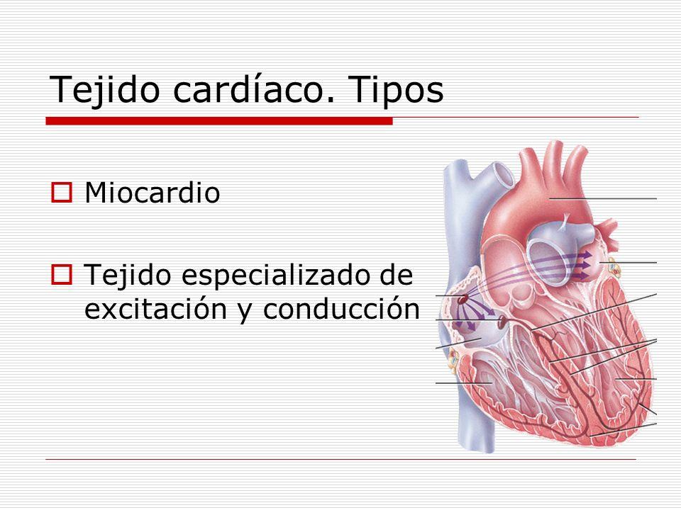 Tejido cardíaco. Tipos Miocardio Tejido especializado de excitación y conducción