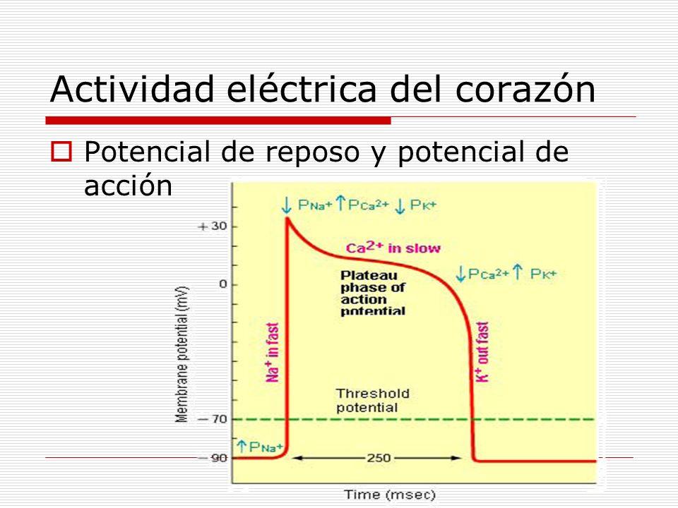 Actividad eléctrica del corazón Potencial de reposo y potencial de acción