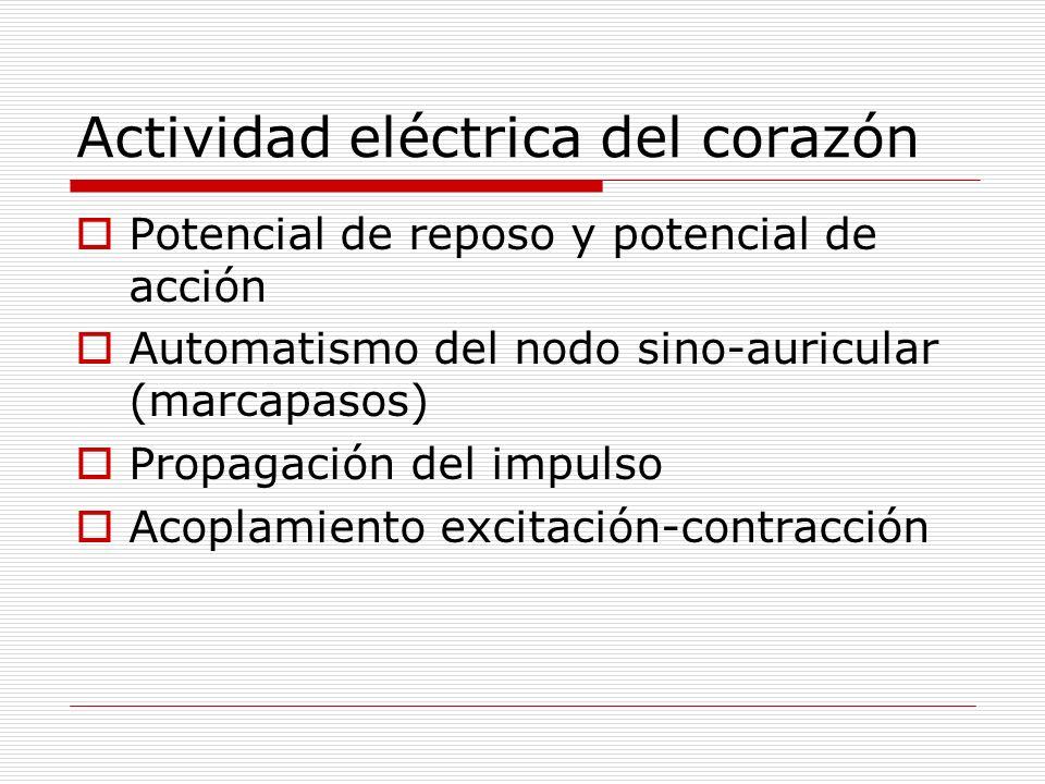 Actividad eléctrica del corazón Potencial de reposo y potencial de acción Automatismo del nodo sino-auricular (marcapasos) Propagación del impulso Aco