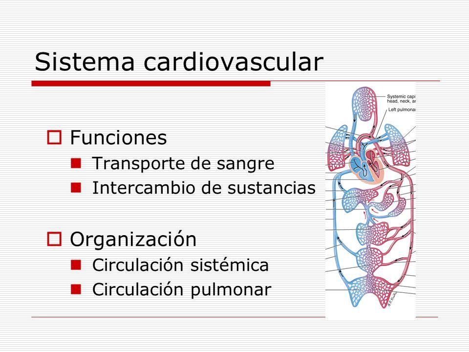 Sistema cardiovascular Funciones Transporte de sangre Intercambio de sustancias Organización Circulación sistémica Circulación pulmonar