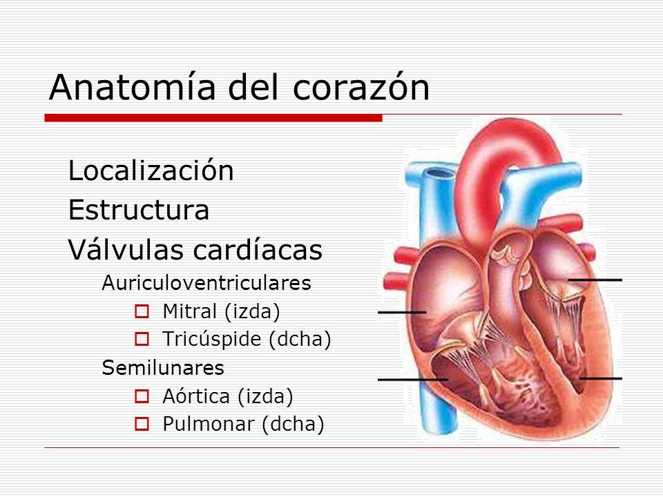 Anatomía del corazón Localización Estructura Válvulas cardíacas Auriculoventriculares Mitral (izda) Tricúspide (dcha) Semilunares Aórtica (izda) Pulmo