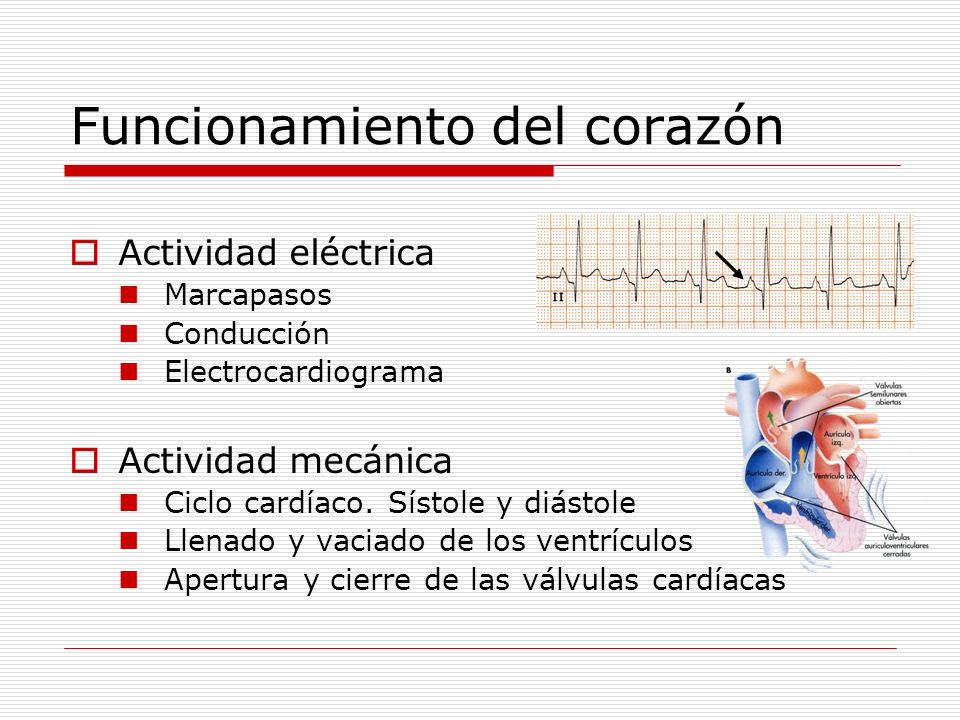 Funcionamiento del corazón Actividad eléctrica Marcapasos Conducción Electrocardiograma Actividad mecánica Ciclo cardíaco. Sístole y diástole Llenado