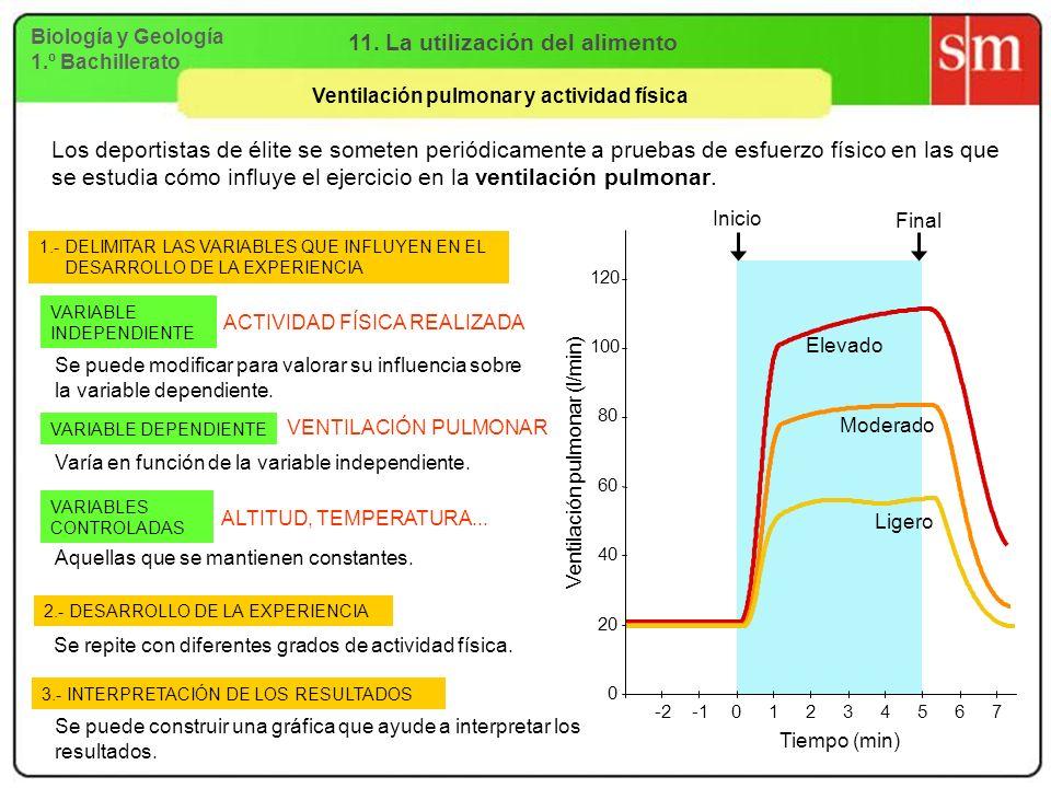 Biología y Geología 1.º Bachillerato 11. La utilización del alimento Ventilación pulmonar y actividad física Inicio Final Los deportistas de élite se