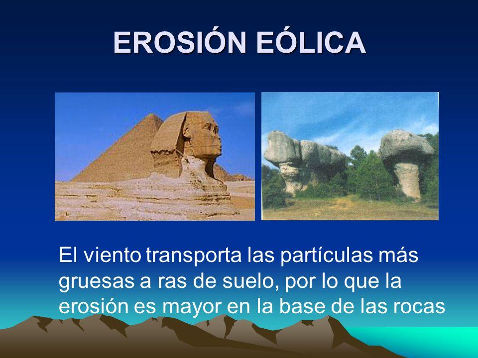 EROSIÓN EÓLICA El viento transporta las partículas más gruesas a ras de suelo, por lo que la erosión es mayor en la base de las rocas