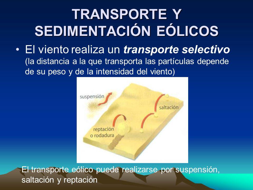 TRANSPORTE Y SEDIMENTACIÓN EÓLICOS El viento realiza un transporte selectivo (la distancia a la que transporta las partículas depende de su peso y de
