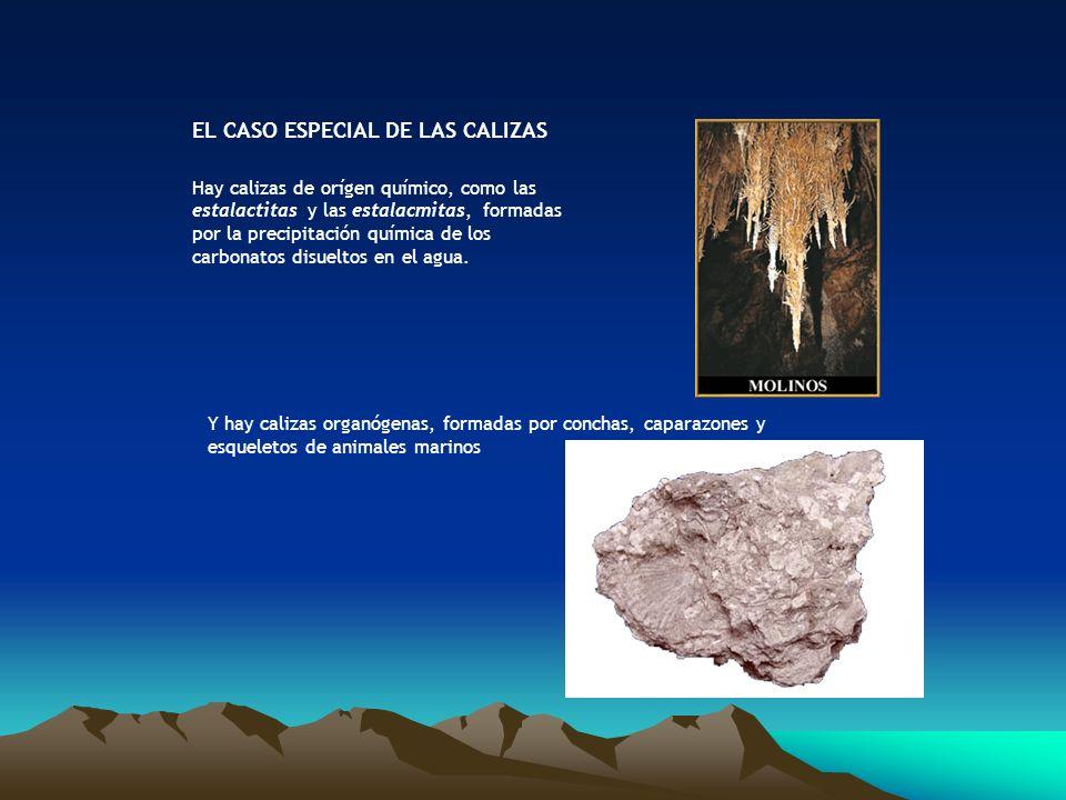 EL CASO ESPECIAL DE LAS CALIZAS Hay calizas de orígen químico, como las estalactitas y las estalacmitas, formadas por la precipitación química de los