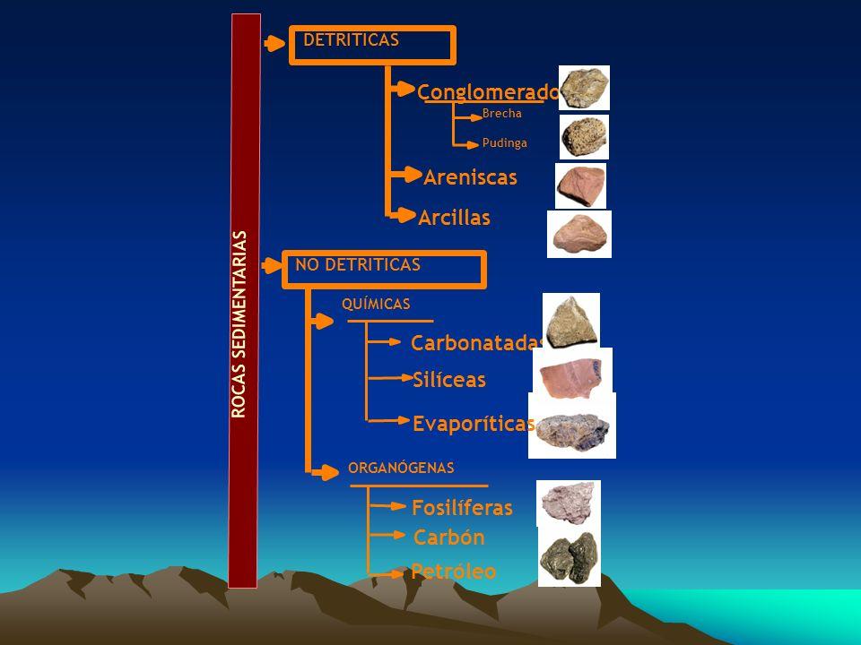 DETRÍTICAS NO DETRÍTICAS QUÍMICAS ORGANÓGENAS Conglomerados Arcillas Areniscas Brecha Pudinga Carbonatadas Silíceas Evaporíticas Fosilíferas Carbón Pe