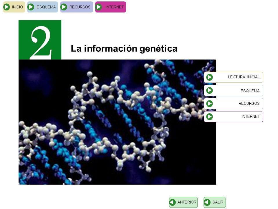 INICIOESQUEMARECURSOSINTERNET SALIRANTERIOR La información genética LECTURA INICIAL ESQUEMA RECURSOS INTERNET