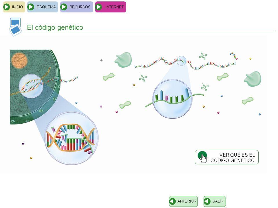 INICIOESQUEMARECURSOSINTERNET El código genético SALIRANTERIOR VER QUÉ ES EL CÓDIGO GENÉTICO