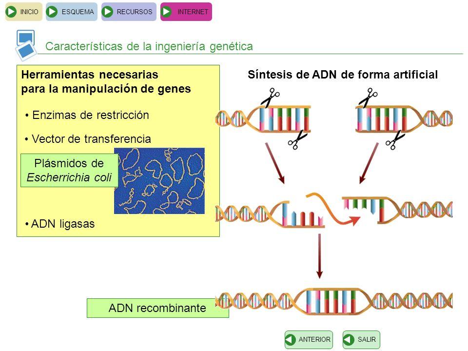 ADN recombinante INICIOESQUEMARECURSOSINTERNET Características de la ingeniería genética SALIRANTERIOR Herramientas necesarias para la manipulación de