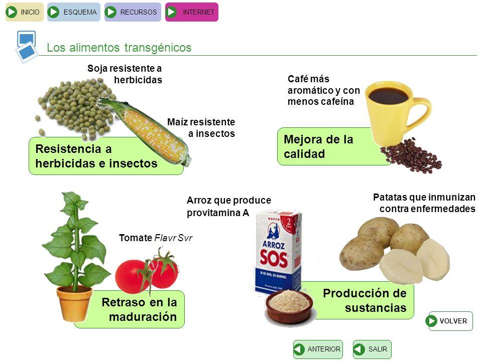 Retraso en la maduración Producción de sustancias Mejora de la calidad INICIOESQUEMARECURSOSINTERNET Los alimentos transgénicos SALIRANTERIOR Tomate F
