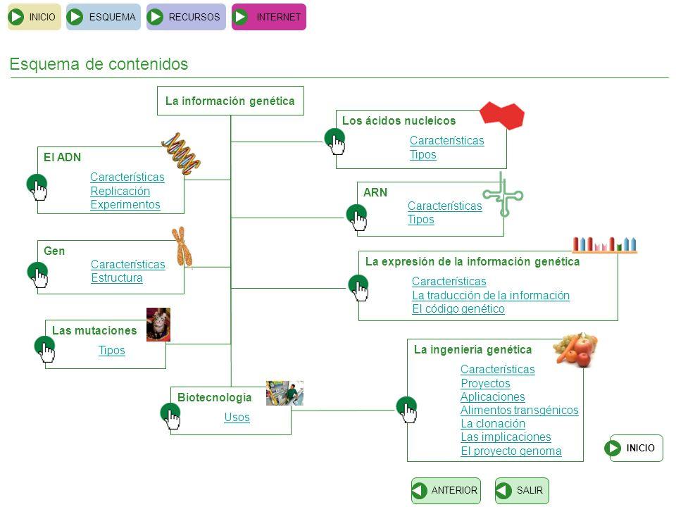 Esquema de contenidos Los ácidos nucleicos Características Tipos INICIOESQUEMARECURSOSINTERNET El ADN Características Replicación Experimentos Gen Car