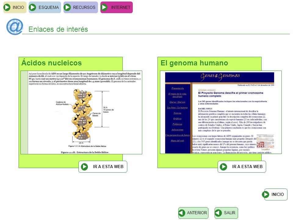 INICIOESQUEMARECURSOSINTERNET Enlaces de interés INICIO SALIRANTERIOR Ácidos nucleicos IR A ESTA WEB El genoma humano IR A ESTA WEB