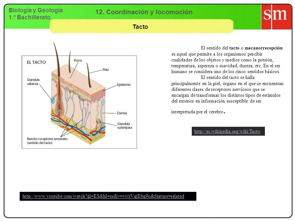 Biología y Geología 1.º Bachillerato 12. Coordinación y locomoción Tacto El sentido del tacto o mecanorrecepción es aquel que permite a los organismos