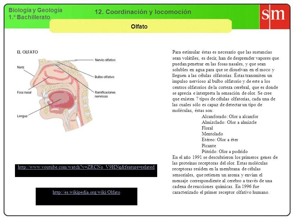 Biología y Geología 1.º Bachillerato 12. Coordinación y locomoción Olfato http://www.youtube.com/watch?v=ZRCNo_V9HNg&feature=related http://es.wikiped